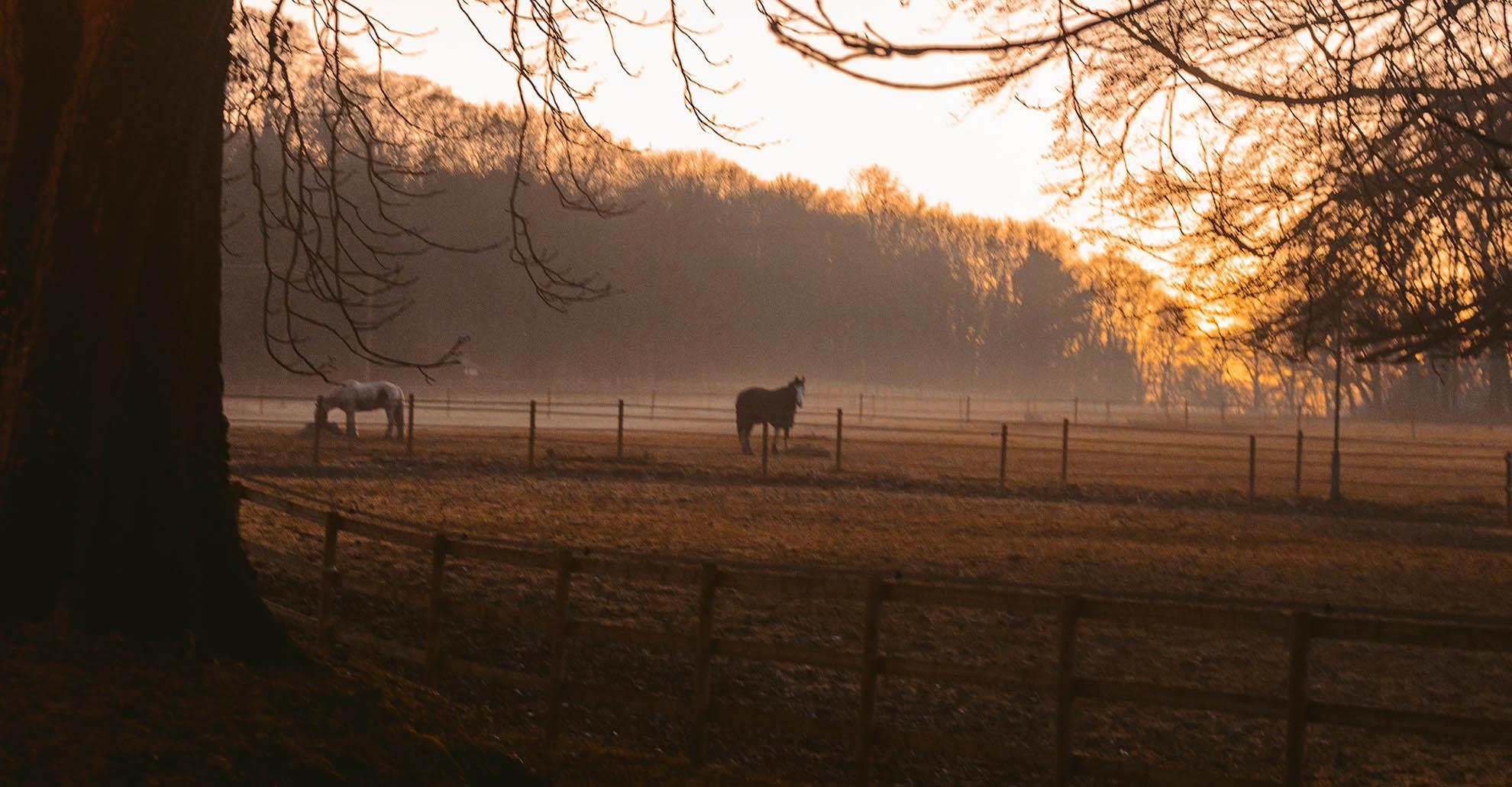 Paarden 1 1
